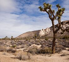 The Joshua Tree by jpatterson