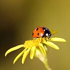 Ladybird by Photo Scotland