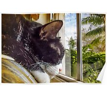 Untroubled Tropical Siesta Poster