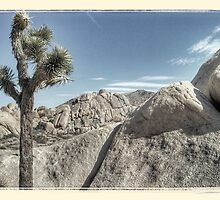 joshua IV -- joshua tree national park by pj johnson