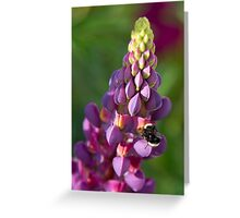 Buzzzzzzzy Bee on Lupine Greeting Card