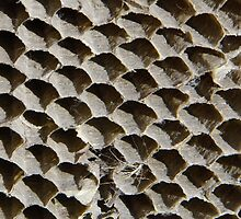 Wasp Nest by WildestArt