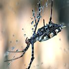 Raindrops keep falling on my web by Rina Greeff
