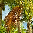 Coconut palms by Thad Zajdowicz