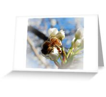 SOFT AND DELICATE NATURE Greeting Card