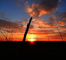 BEYOND THE BARBED-WIRE FENCE by Sandra  Aguirre