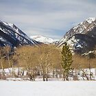 Colorado Rocky Mountain Winter Horseshoe Park by Bo Insogna