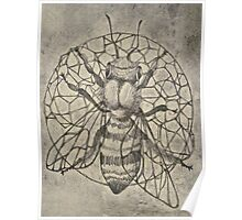 Bee etching  Poster