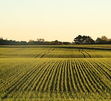 Green field from denmark by FannyJo