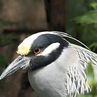 Night Heron by George  Link