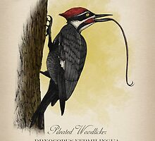Pileated Woodlicker - Dryocopus Vermilingua by Howard Dale