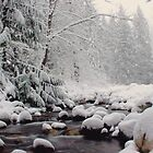 Winter Wonderland - At the Creek by Tamara Brandy