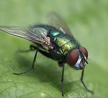 Fly on the leaf by AddictGraphics