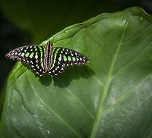 Green Triangle by PhotosByHealy
