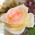 Apricot Nectar Rose by Jeannine de Wet