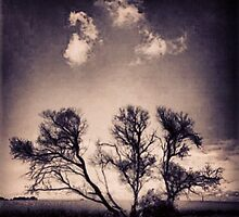 Tree Cloud I by JolieBlue
