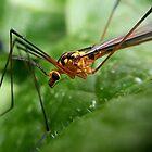 A Bugs Life by MonaJud