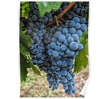 Mudgee Grapes Poster