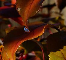 Red drip leaves  by Rae Ann M. Garrett