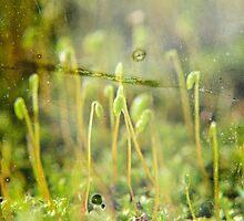 Life behind glass by Scott Mitchell