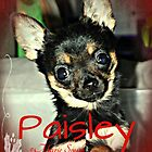Pistol Packing Lady Paisley Marie by Marie Smith