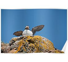 Puffed Up Puffin Poster