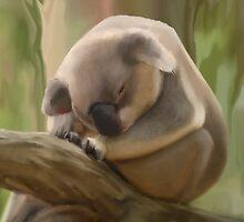Koala Bear Alma Park by John Taylor