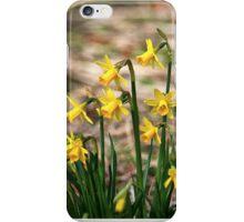 Clump of golden daffodils iPhone Case/Skin
