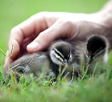 hands in nature By Ken Killeen  by KenKilleen