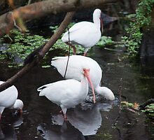 Storks by Imagery