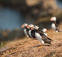 Ready For Take Off by Anne Gilbert