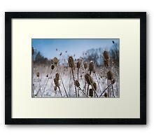 Spiky Things in Snowy Field Framed Print