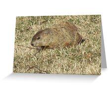 Groundhog days Greeting Card