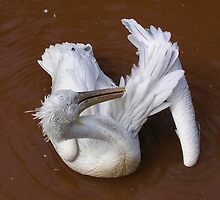 Bath Time, Pelican Style by lezvee