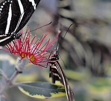 Butterfly With Flower Close Up — Beautiful Photography Prints and Posters by Erik Anderson