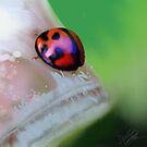 Ladybird on Leaf painting by © Karin  Taylor