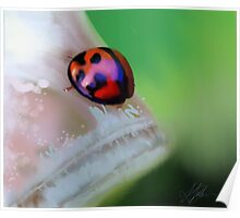 Ladybird on Leaf painting Poster
