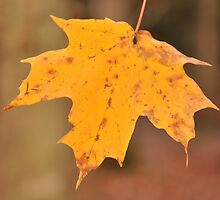 Yellow Leaf by hariharanvg