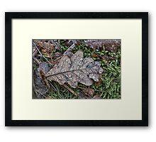 Wet leaves Framed Print