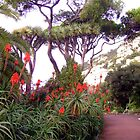 A Dragon Tree (Dracaena) and Aloe arborescens in Gibraltar by Dennis Melling