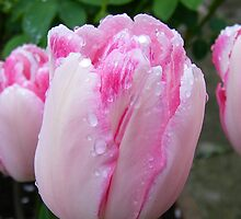 Tulip in the Rain by LoneAngel