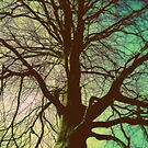 Branching out by shelleybabe2