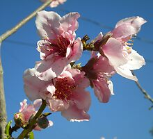 Peach Tree by Fabs35618