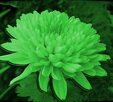 SAINT PATRICKS DAY CHRYSANTHEMUM CARD by ╰⊰✿ℒᵒᶹᵉ Bonita✿⊱╮ Lalonde✿⊱╮