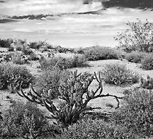 Sonoran Desert Song in Black and White by Lee Craig