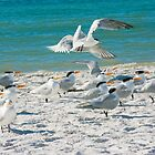 15 Gulls by Imagery