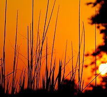 Tall Grass Summer Sunset by LisaThomasPhoto