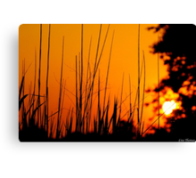 Tall Grass Summer Sunset Canvas Print