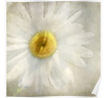 Wintry Daisy Poster