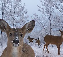 Winter Wonderland by Bill Stephens